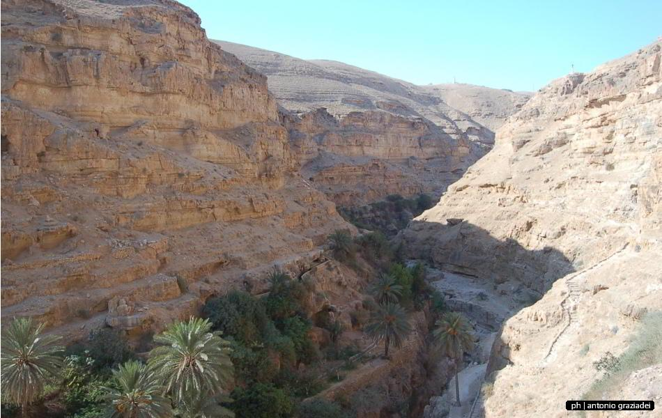 09_oasi in wadi qelt